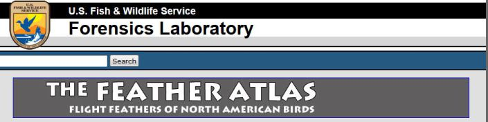 US FWS feather atlas