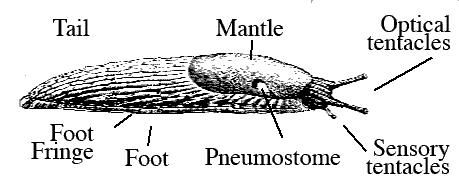 Slug_parts