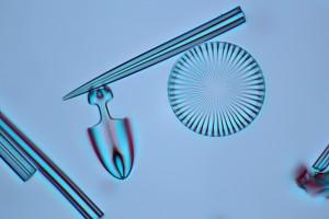 diatom wiki