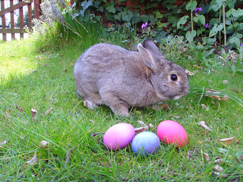 easter rabbit wiki