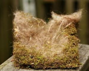 flicker, chickadee nest, Tormol