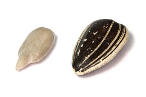 Sunflower_Seeds_Kaldari