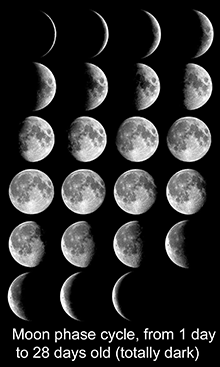 Moon_phases_all_L.ennasa