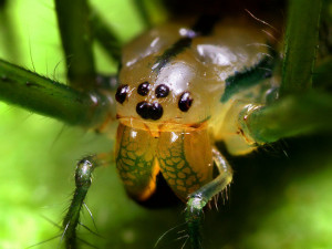 Orchard spider Thomas Shahan flicker