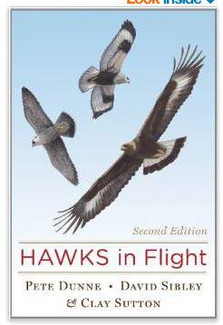 Hawks in flight cover