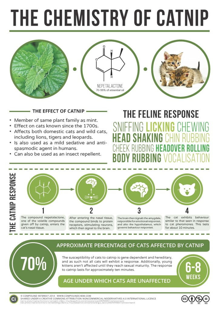 Chemistry-of-Catnip