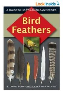 bird feather book