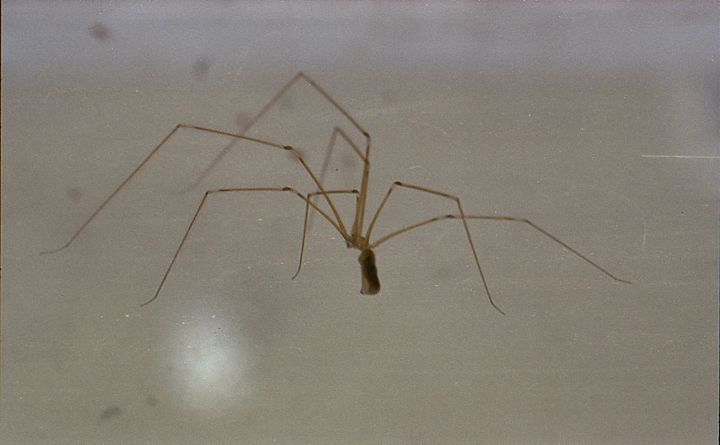 how to avoid spiders at home