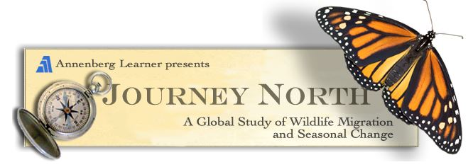 Journey North 3
