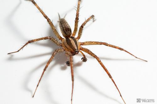 Grass spider JeremyHall Flicker