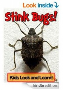 stink bug book