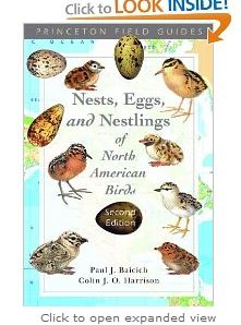 nests eggs and nestlings