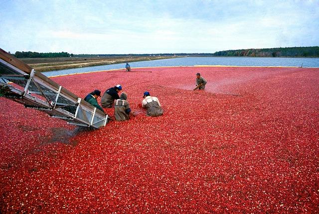cranberry-387284_640 pixaby
