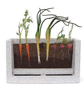 root view farm