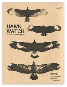 hawk watch guide for beginners