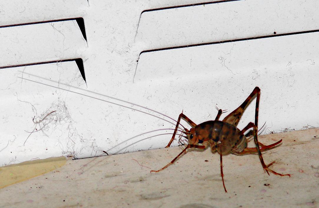 Sprickets The Infinite Spider