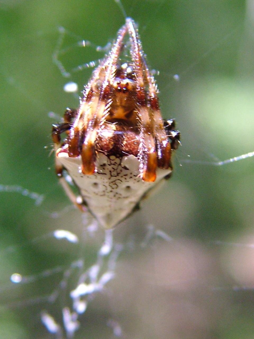 Www Spider